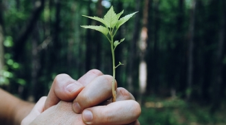 Close up of hands linked together with a small tree growing from the hands, standing in front of a forest